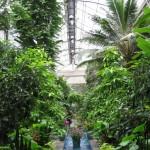Tropenhaus des Botanischen Gartens